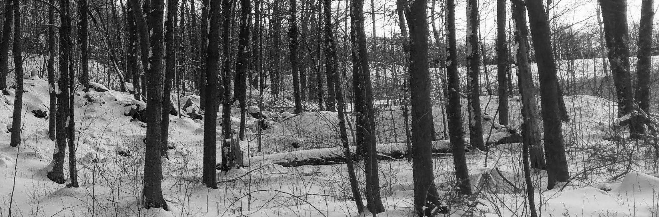 foret epaisse couverte de neige